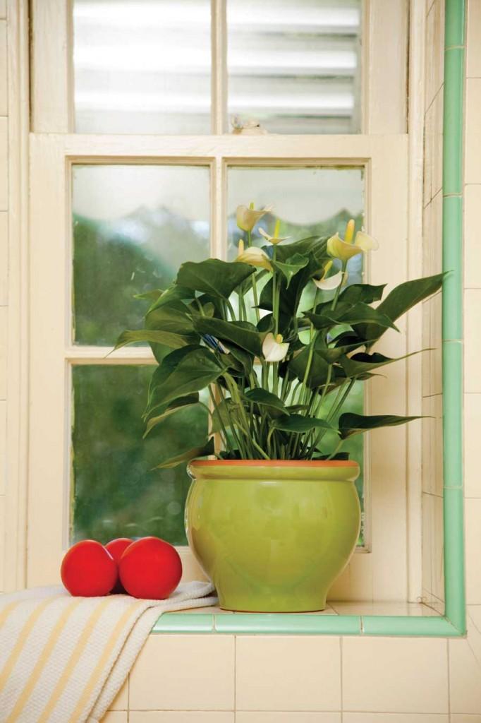 Helpful Houseplants