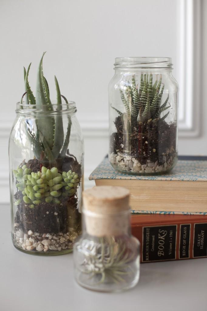 terrarium jars