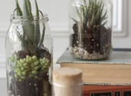 A collection of jars can be repurposed to become countless useful and decorative items. These terrariums are proof of the versatility of a simple glass jar.