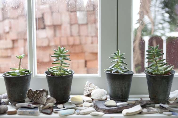 Plant succulents