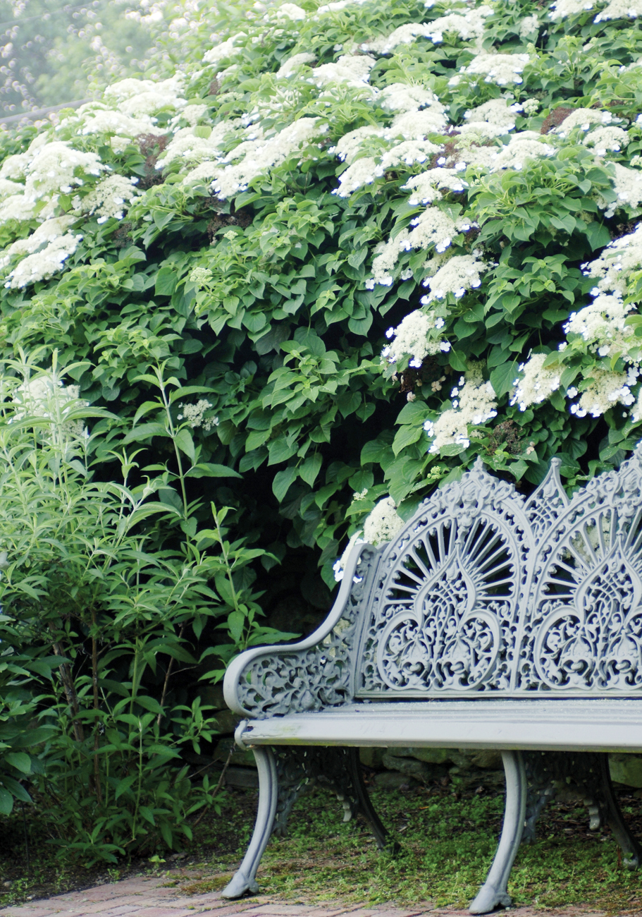 An intricately designed bench nestled beneath an overgrowth of hydrangeas.