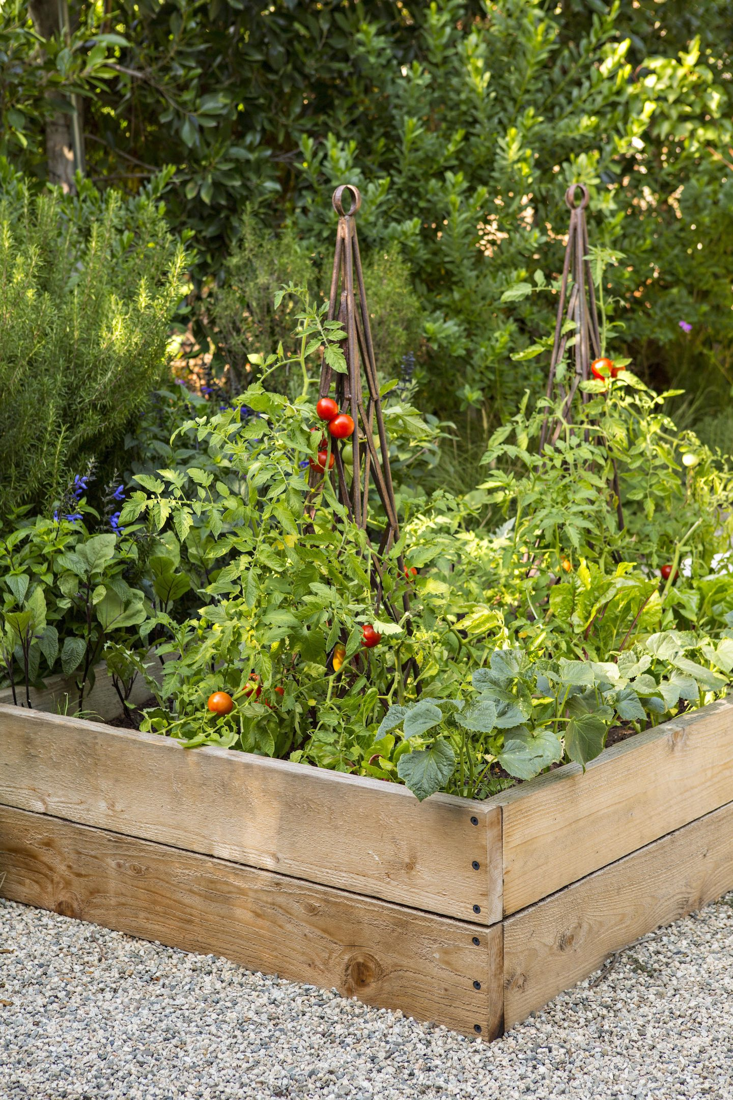 raised veggie bed with iron trellis