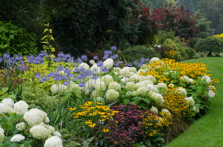 Large_English_perennial_border
