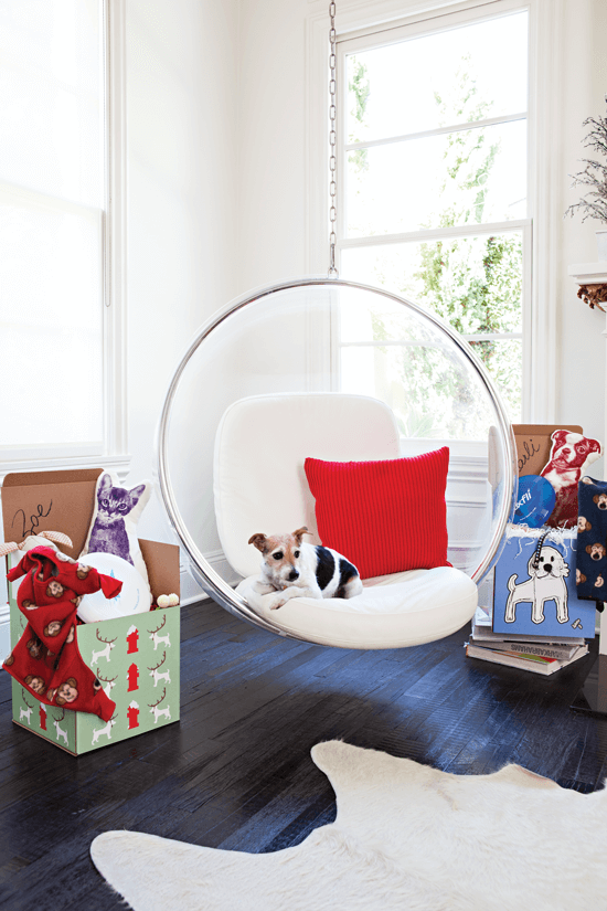 Small dog perched in a modern bubble chair—paired with rustic dark floors and a cowhide rug, the blend of old and new is timeless and fresh.