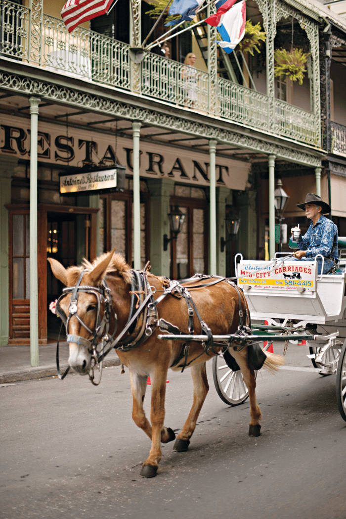 A mule pulling a carriage behind it walking through the French Quarter.