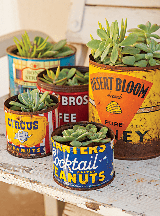 vintage tin cans used as succulent planters.