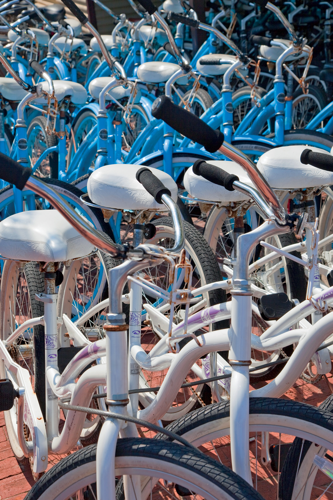A sea of rental bikes.
