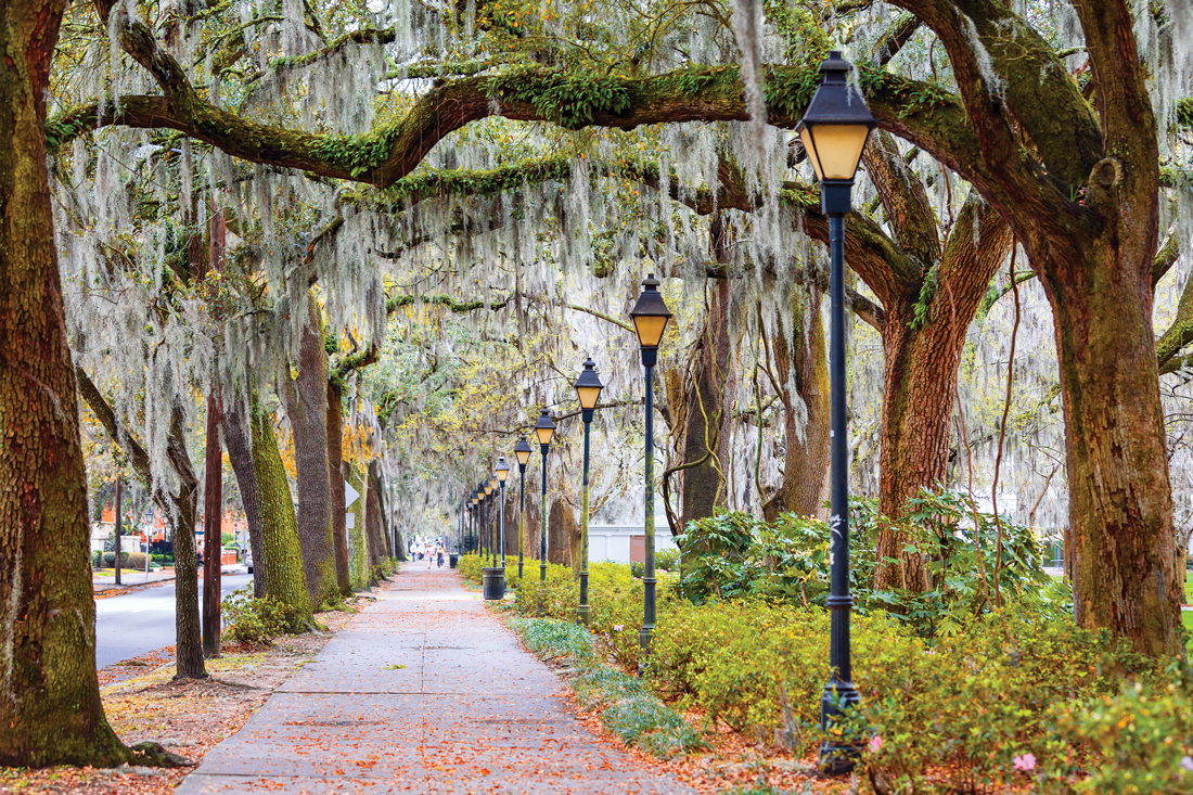 Romantic walkway under the trees in savannah, Georgia.