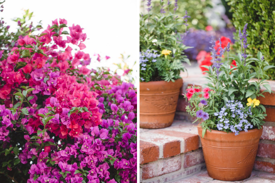 Pink and purple bougainvillea and pots overflowing with multi colored flowers.
