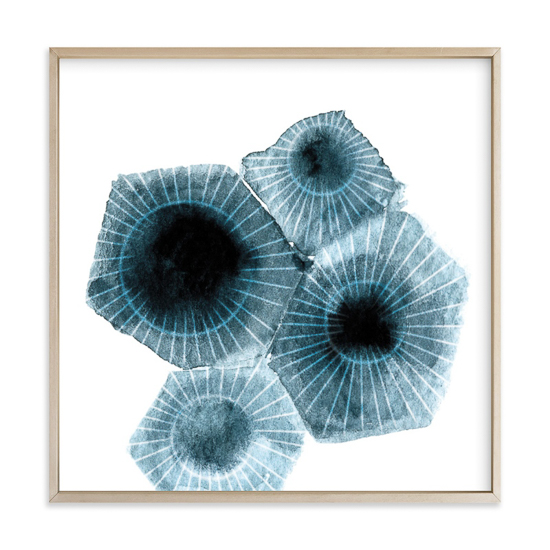 Wall print of fossilized shells in thin wooden frame