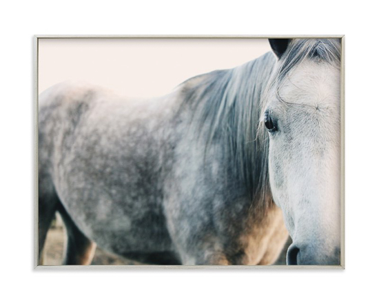 Elegant print of a white horse