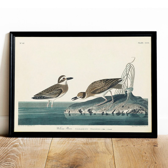 art print of sea birds in a black frame