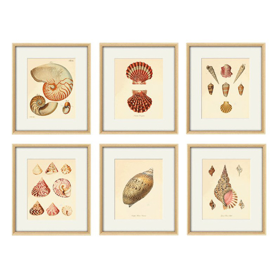 Set of six antique seashell prints in light colored frames