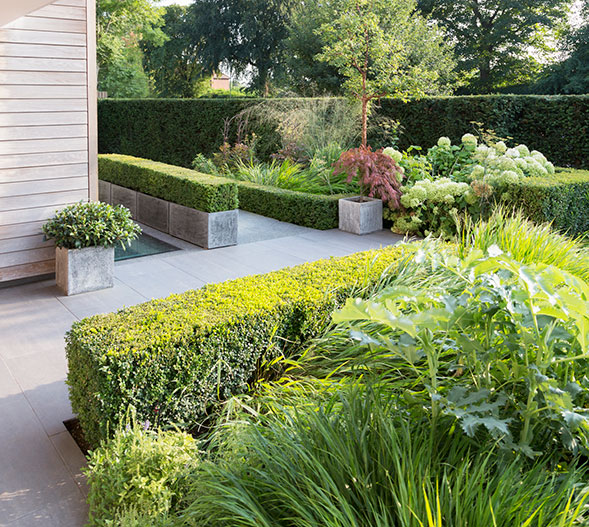 boxwood borders