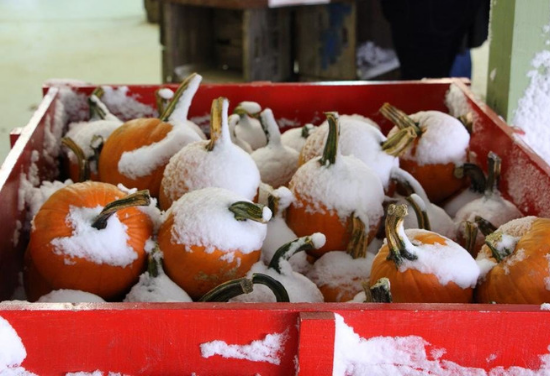 Red wooden box filled with small pumpkins covered in snow.