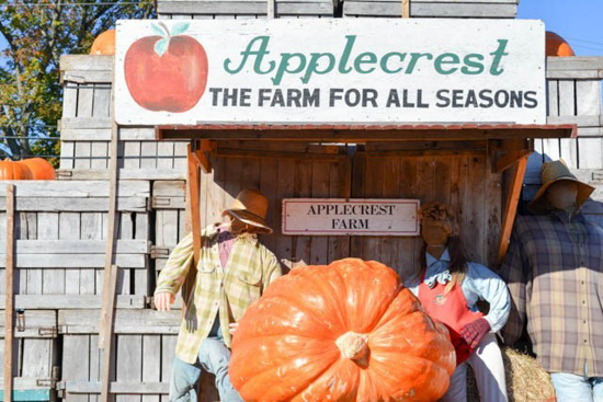 Applecrest Farms sign, with a giant pumpkin and scarecrows.
