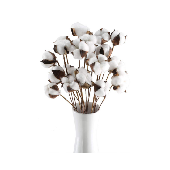White vase filled with a bundle of natural cotton stems.
