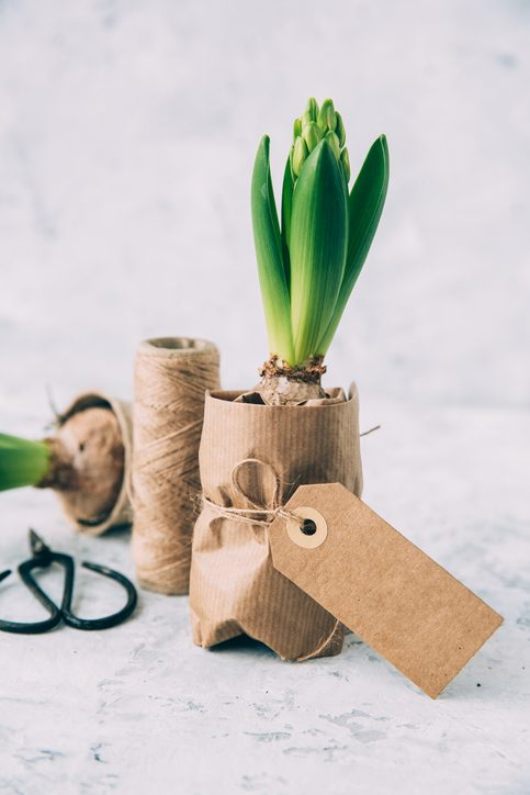 Vibrant green bulbs wrapped in Kraft paper and twine with custom gift tags.