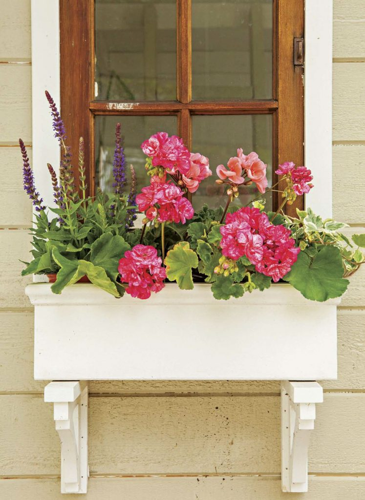 Vintage wooden window with custom white window box with pink geraniums.