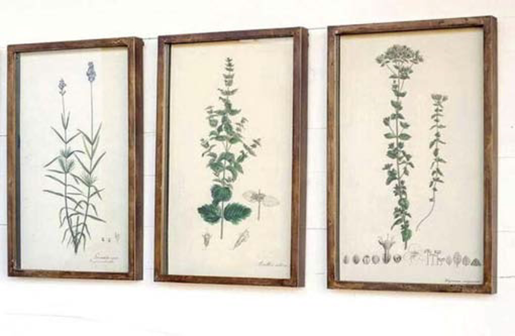 Three botanical prints in wooden frames.