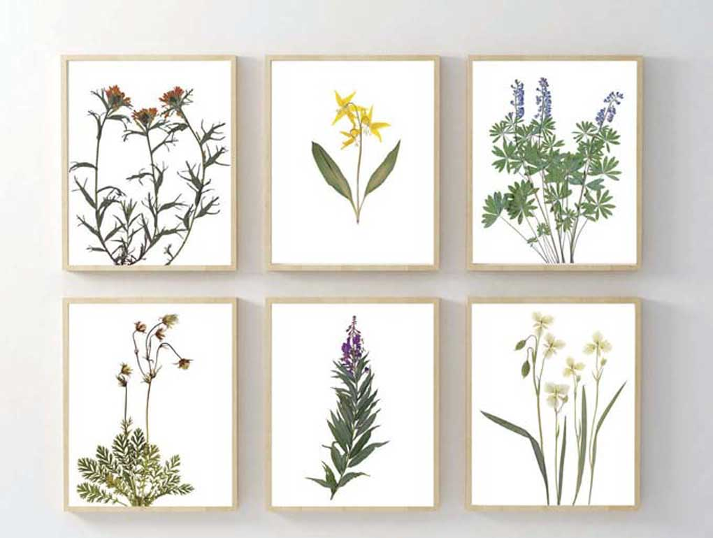 Set of 6 pressed flower botanical prints.