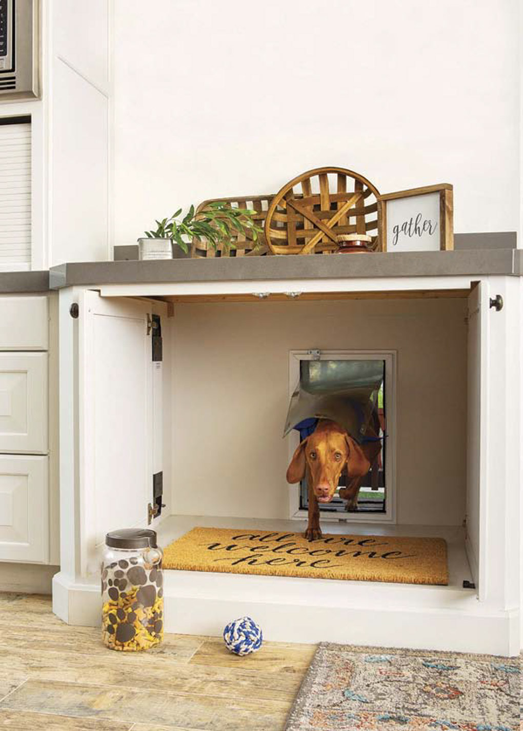 kitchen remodel with custom cabinets that open to a doggie door with a chocolate brown dog coming inside.
