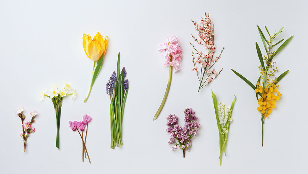 Overhead shot of bright spring colored groups of flowers on a white backdrop.