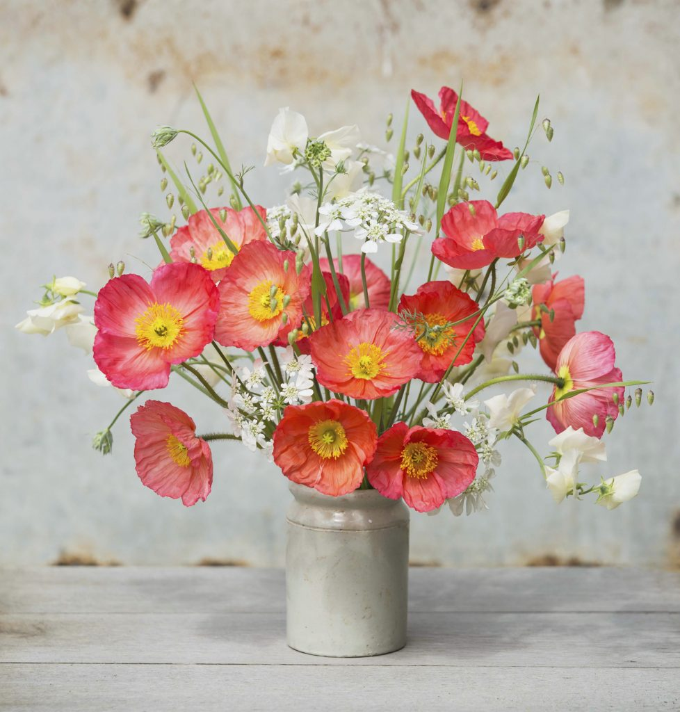 Icelandic poppy arrangement in a gray ceramic vase on a wooden table.