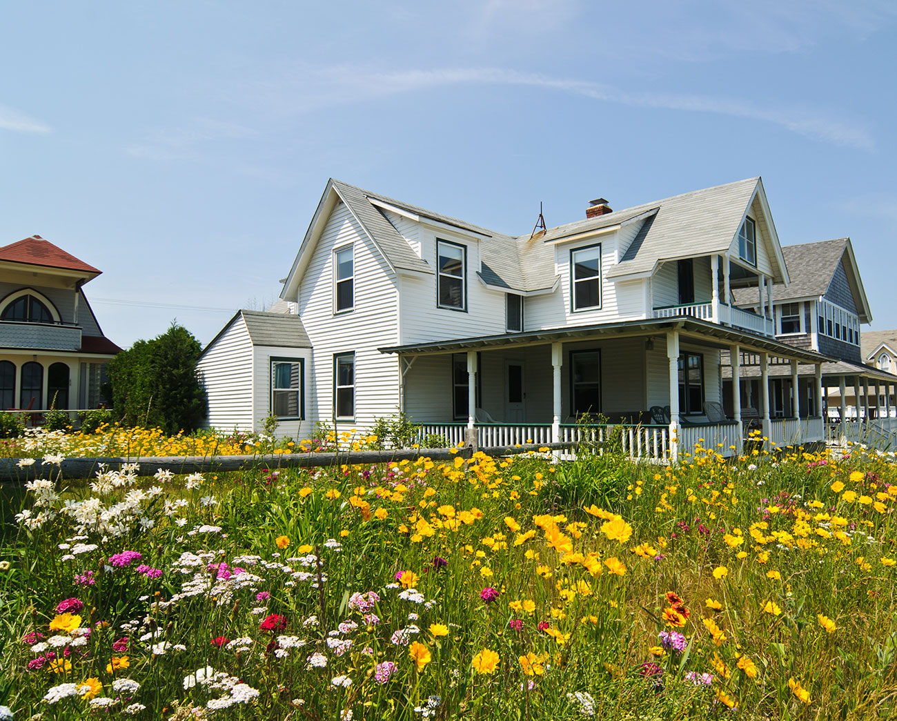 Field of wildflowers behind a Victorian cottage.