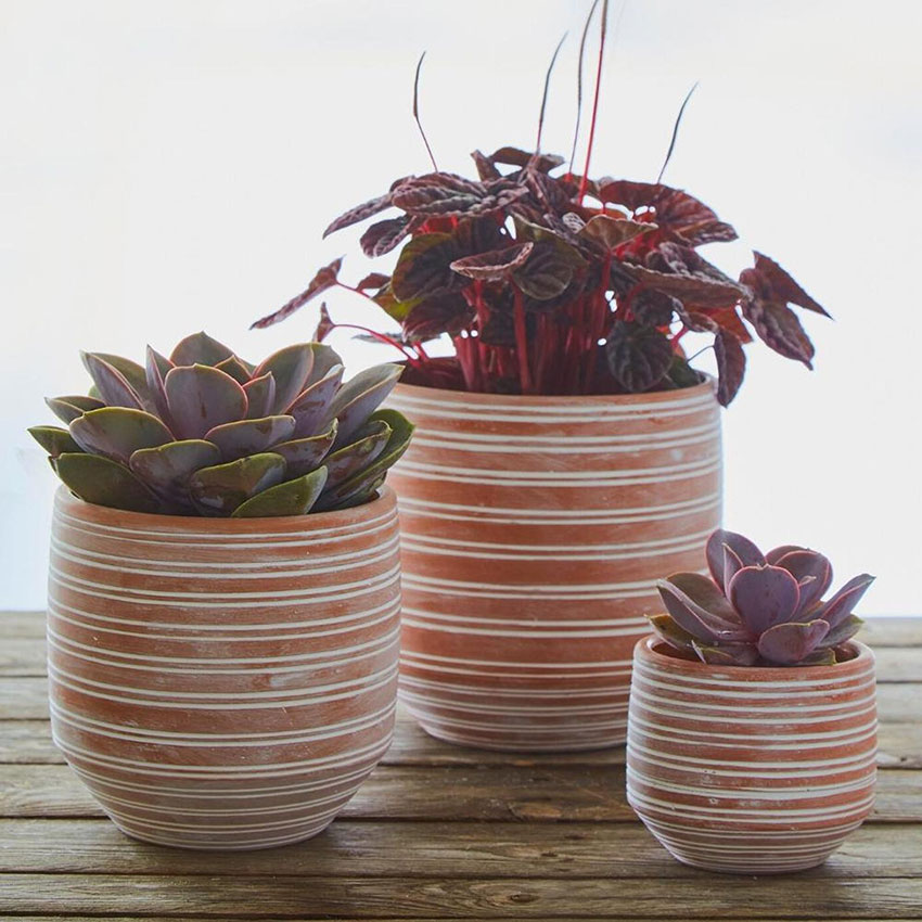 striped and white washed pots with succulents inside